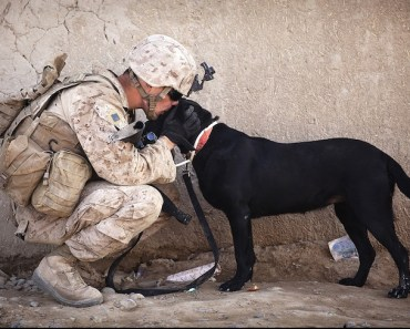 Soldier Dog Hug Kindness