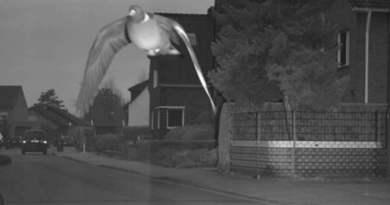 Pombo é multado por radar de velocidade na Alemanha