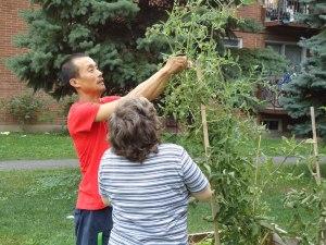 Services et conseils horticoles de la Société écocitoyenne de Montréal