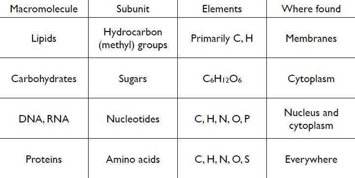Biological Molecules Worksheet and Worksheets 44 Best Macromolecules Worksheet Full Hd Wallpaper
