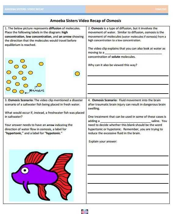 Biology Diffusion and Osmosis Worksheet Answer Key and 27 Best Amoeba Sisters Handouts Images On Pinterest
