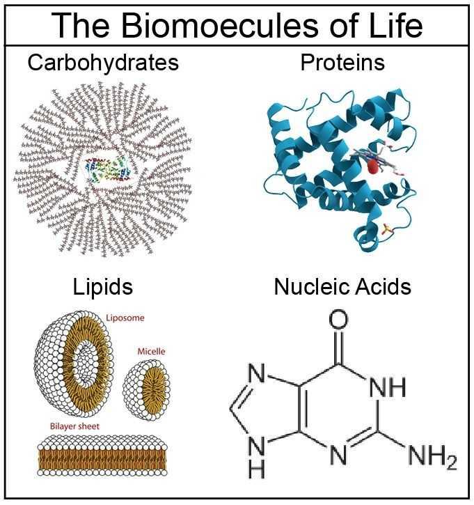 Biomolecules Concept Map Worksheet together with 83 Best Biochemistry Images On Pinterest