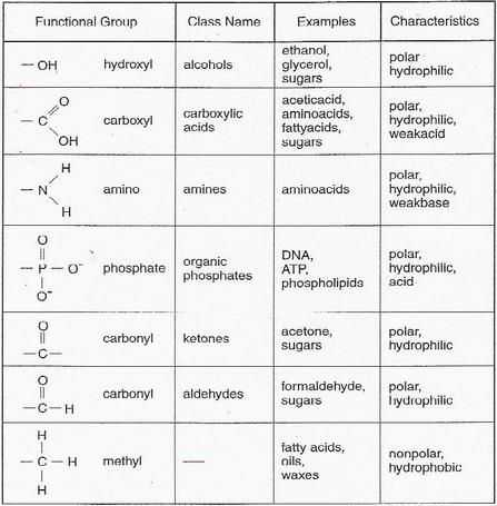 Biomolecules Worksheet Answers with 13 Best Biology Images On Pinterest
