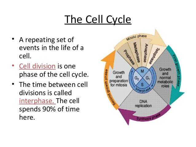 Cell Cycle Coloring Worksheet Answer Key Along with Anatomy and Physiology Cell Transport and the Cell Cycle