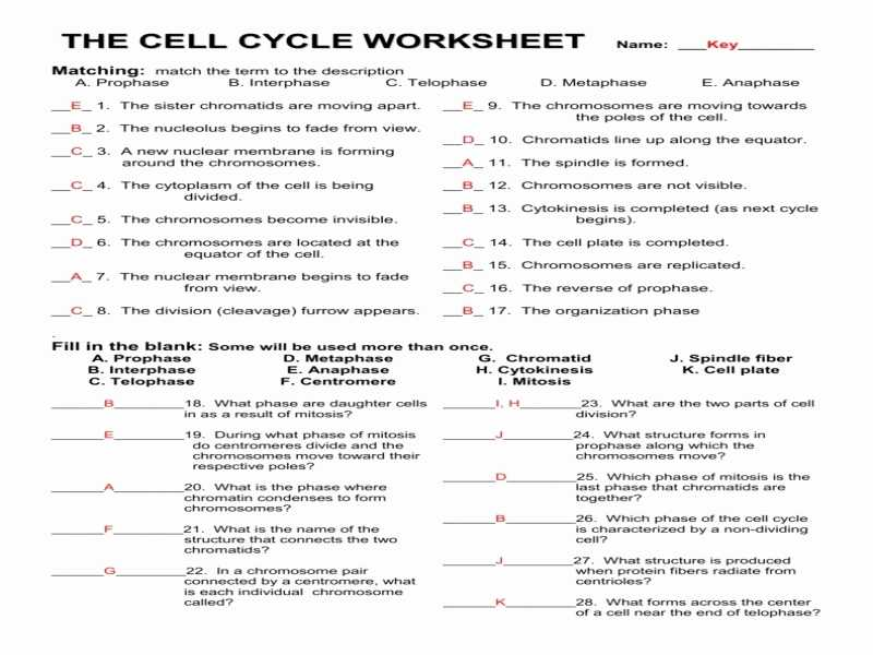 Cell Cycle Practice Worksheet Also Worksheets 42 Re Mendations the Cell Cycle Worksheet Hi Res