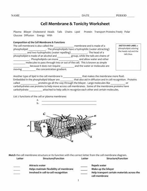 Cell Transport Review Worksheet Answers and Beautiful Cell Transport Review Worksheet Awesome Cell Transport