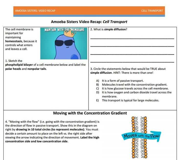 Cell Transport Worksheet Along with 52 Best Our Videos Images On Pinterest