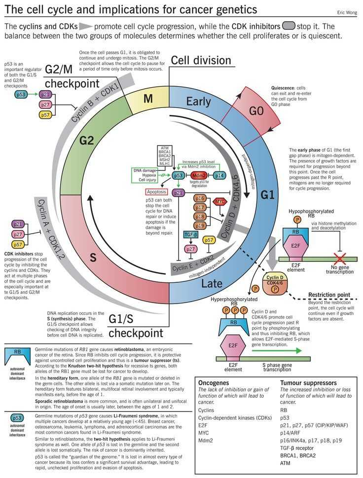 Cells Alive Animal Cell Worksheet Answer Key Along with 199 Best Cell Structure & Function Images On Pinterest