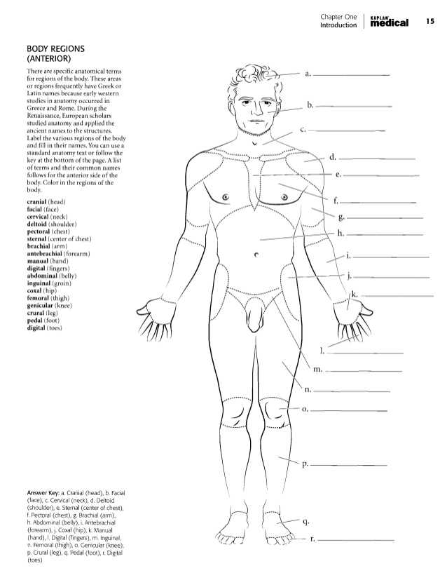 Chapter 1 Introduction to Human Anatomy and Physiology Worksheet Answers with Anatomia Dibujos
