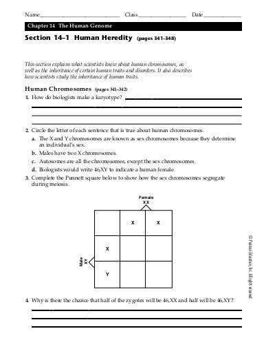 Chapter 14 the Human Genome Worksheet Answer Key as Well as Sec 7 1 Chromosomes and Phenotype Worksheet