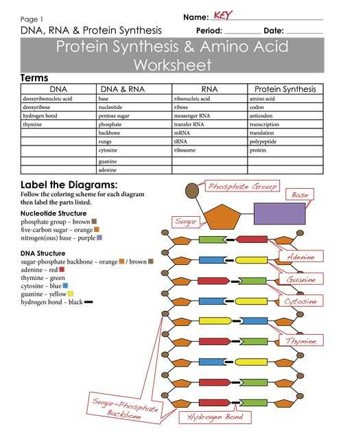 Control Of Gene Expression In Prokaryotes Worksheet Answers or 712 Best Ap Biology Images On Pinterest