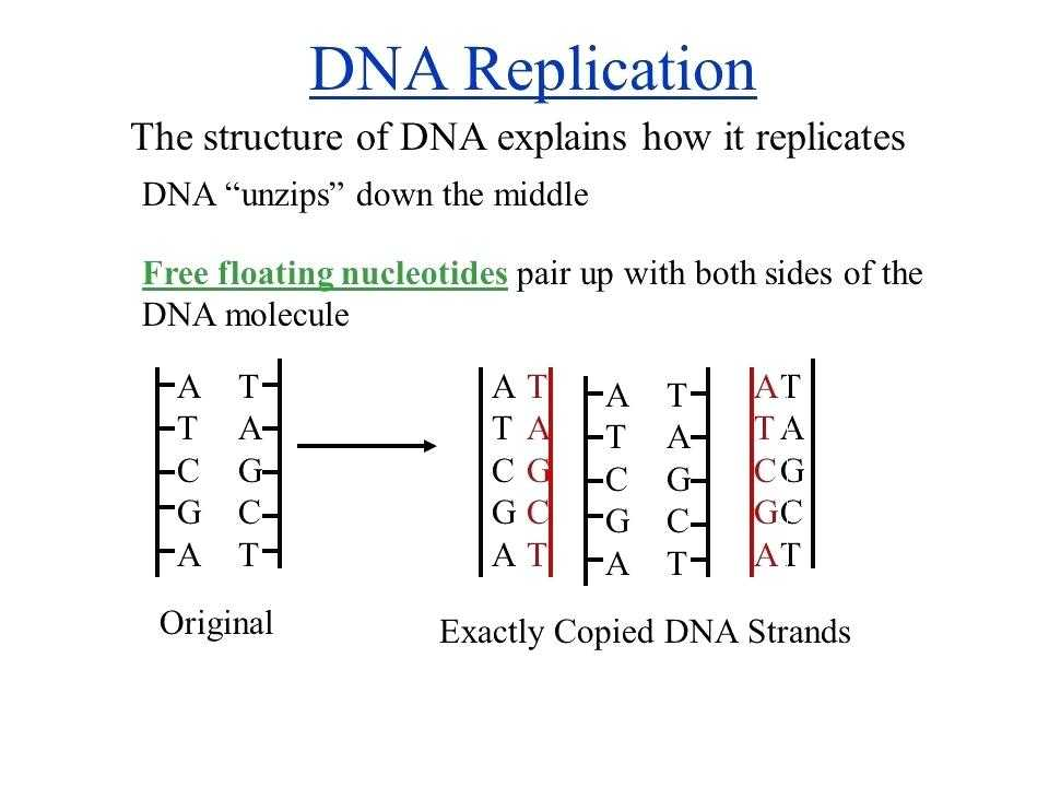 Dna and Replication Worksheet Along with New Design Resume New 3226 Best Resumes Cv Letterheads Cover Letter