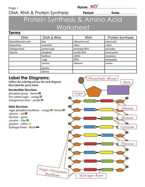 Dna Base Pairing Worksheet Answer Sheet Along with Protein Synthesis and Amino Acid Worksheet Answer Key Luxury 712
