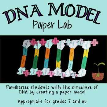 Dna Model Activity Worksheet Answers Also Dna Structure Lab Paper Model