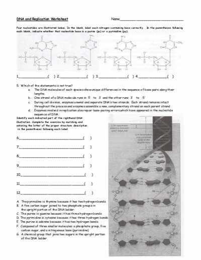 Dna Replication Worksheet Answer Key with Dna and Replication Worksheet solon City Schools