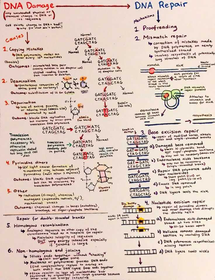 Dna the Secret Of Life Worksheet Answers Also 358 Best Science Dna Images On Pinterest