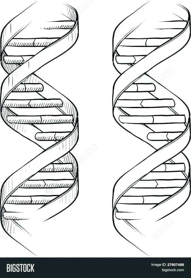 Double Helix Coloring Worksheet Answers and Biology Coloring Pages Biology Coloring Page Human Biology Coloring