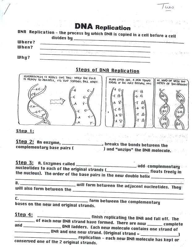 Double Helix Coloring Worksheet Answers and Dna Coloring Worksheet Biology Junction Worksheet Answers Fungi