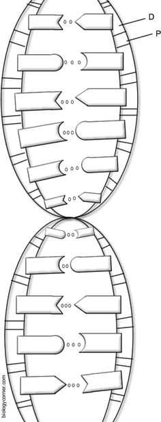 Double Helix Coloring Worksheet Answers together with My Nmsi Dna & Rna Models My Biology Class Pinterest
