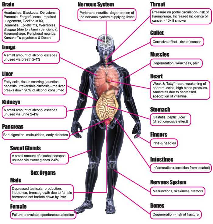 Effects Of Alcohol Worksheet and 14 Best Obesity Smoking and Alcohol Effects Images On Pinterest