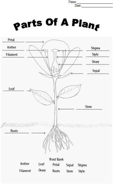 Effects Of Co2 On Plants Worksheet Answers as Well as 231 Best Science Images On Pinterest