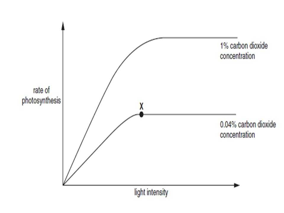 Effects Of Co2 On Plants Worksheet Answers with Plant Revision Proprofs Quiz