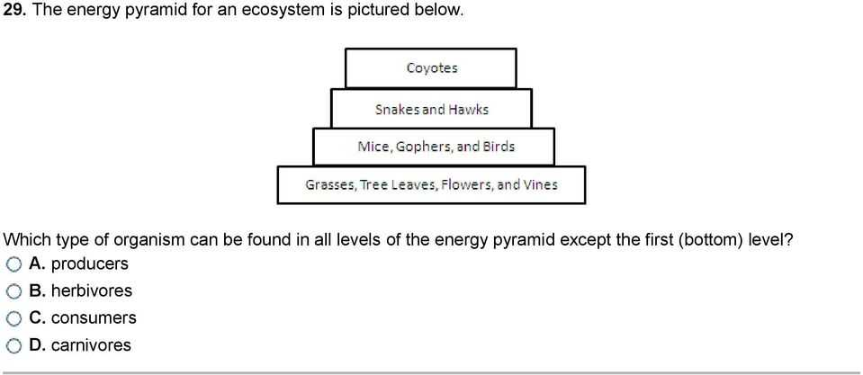 Energy Flow In Living Things Worksheet or the Animals at Higher Levels are More Petitive so Fewer Animals