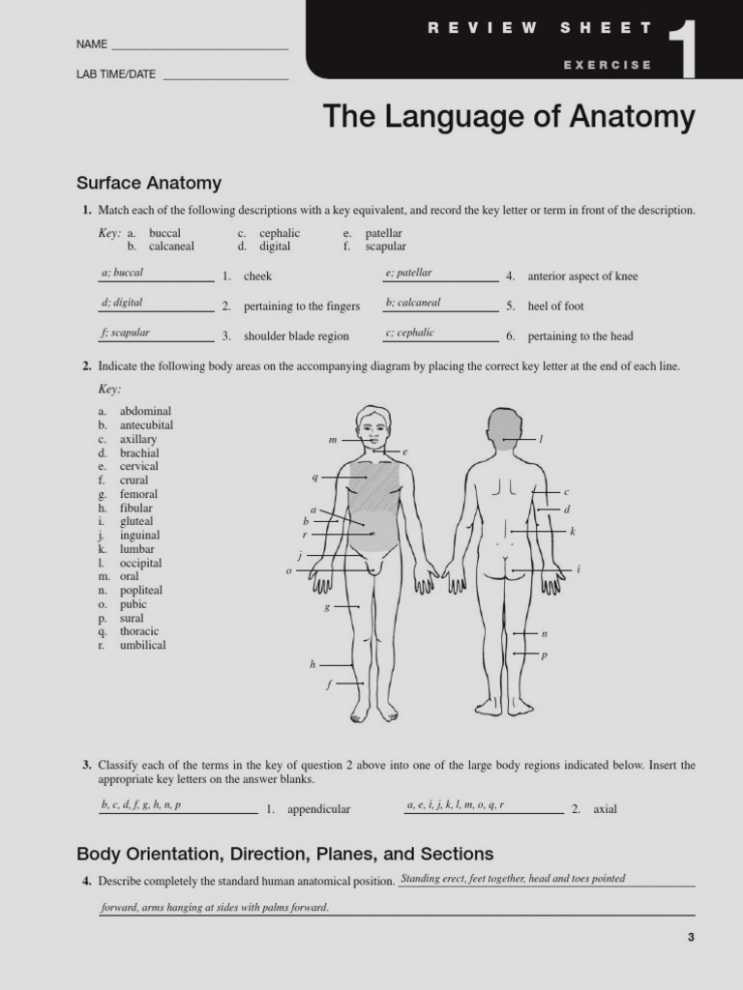 Fetal Pig Dissection Pre Lab Worksheet Answers Along with Fantastisch Anatomy and Physiology Lab Manual Zeitgenössisch