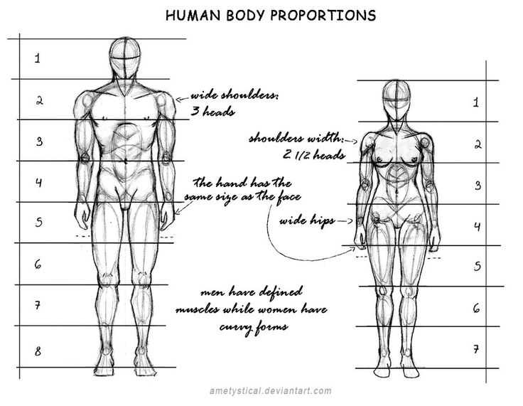 Figure Drawing Proportions Worksheet or 118 Best Sketch Book Images On Pinterest