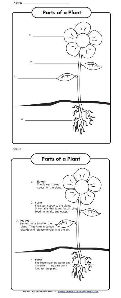 Flower Anatomy Worksheet Key Also 334 Best Science Plants Images On Pinterest