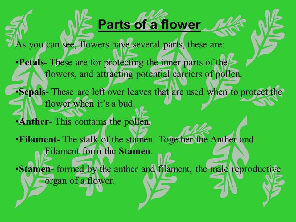 Flower Anatomy Worksheet Key Also Flowers and Plant Reproduction Line Lesson 1 Watch This First and