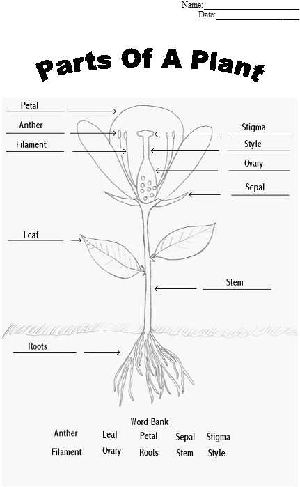Flower Structure and Reproduction Worksheet Answers with Parts Of A Plant Coloring Sheet Tape or Glue Parts to the Sheet as