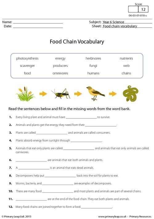 Food Chains and Food Webs Skills Worksheet Answers or 19 Lovely Food Chains and Food Webs Skills Worksheet Answers