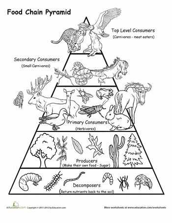 Food Chains and Food Webs Skills Worksheet Answers with 60 Best Habitats & Food Chains Images On Pinterest
