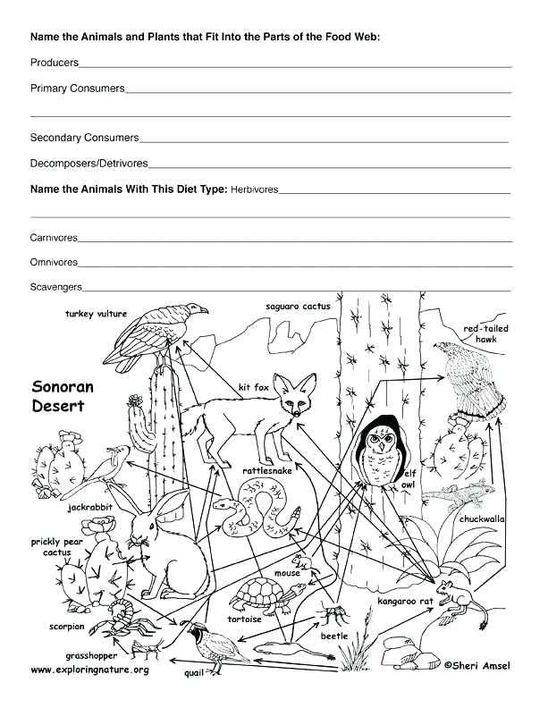 Food Web Practice Worksheet Also Food Chain Worksheet Food Chain Worksheet Grade Free Worksheets