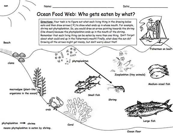 Food Web Practice Worksheet and 101 Best Food Chains Webs Images On Pinterest