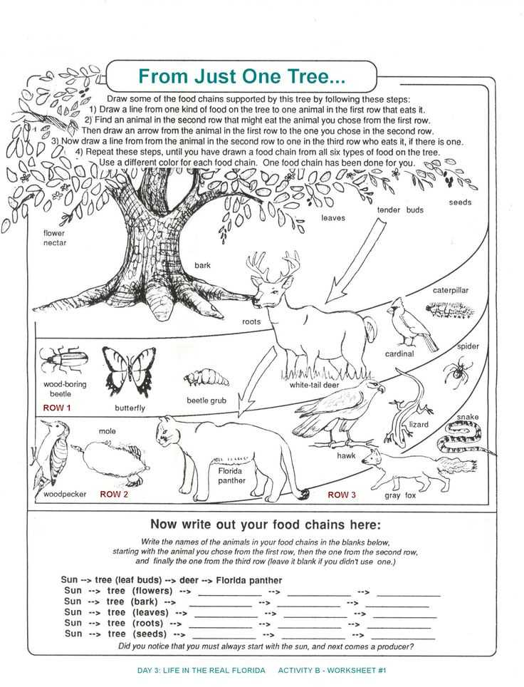 Food Web Practice Worksheet together with 251 Best Animal Food Chains Images On Pinterest