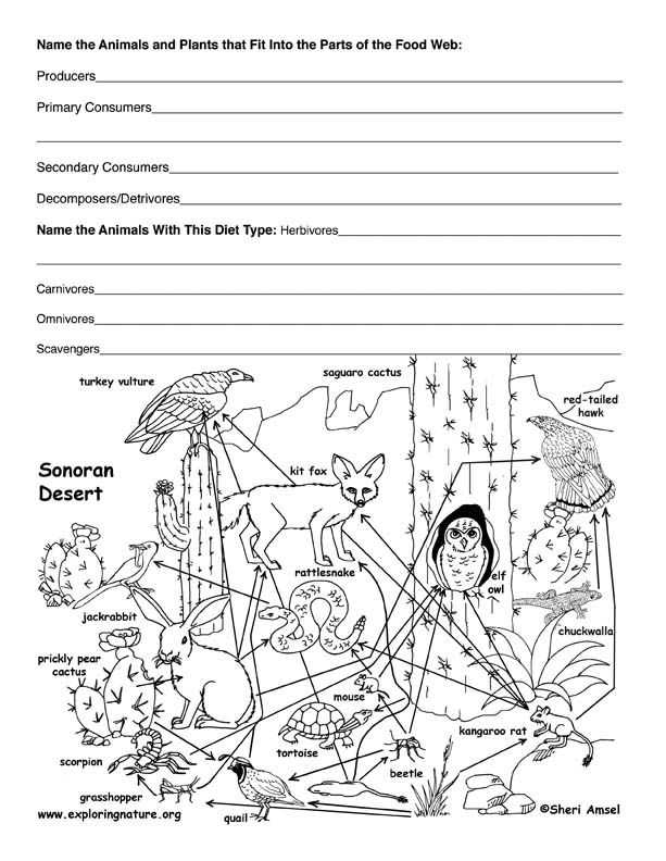 Food Web Worksheet Answer Key Along with 293 Best 4°eso Images On Pinterest