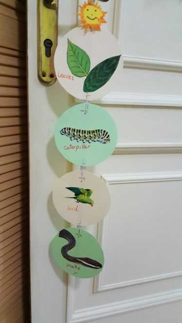 Food Web Worksheet with Food Chain … Science Crafts Pinterest