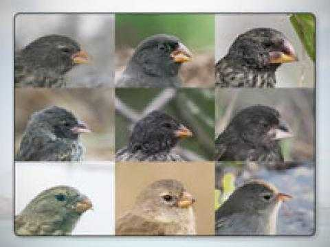 Galapagos island Finches Worksheet and the origin Of Species the Beak Of the Finch