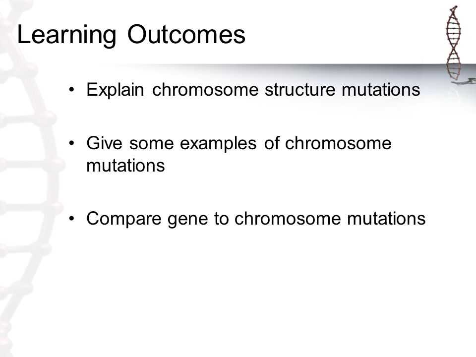 Gene and Chromosome Mutation Worksheet Also 1 What are Genetic Disorders Caused by Ppt Video Online