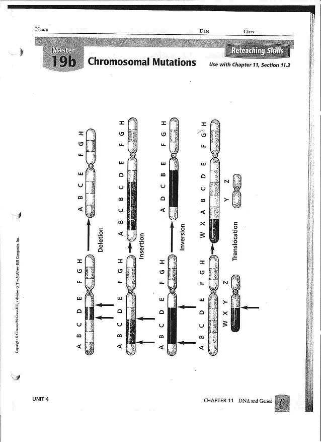 Gene and Chromosome Mutation Worksheet with Free Worksheets Mutations Worksheet Free Math Worksheets for