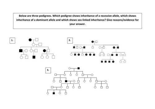 Genetics Pedigree Worksheet Key Along with Genetics Pedigree Worksheet Cadrecorner