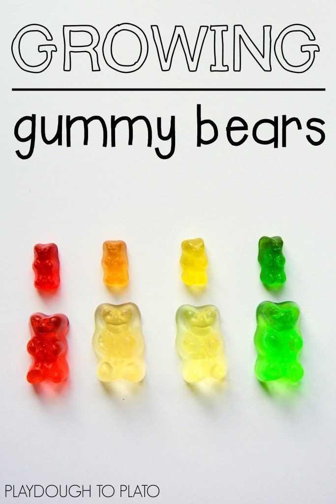 Gummy Bear Science Experiment Worksheet Along with Science for Kids Gummy Bear Science Experiment 1
