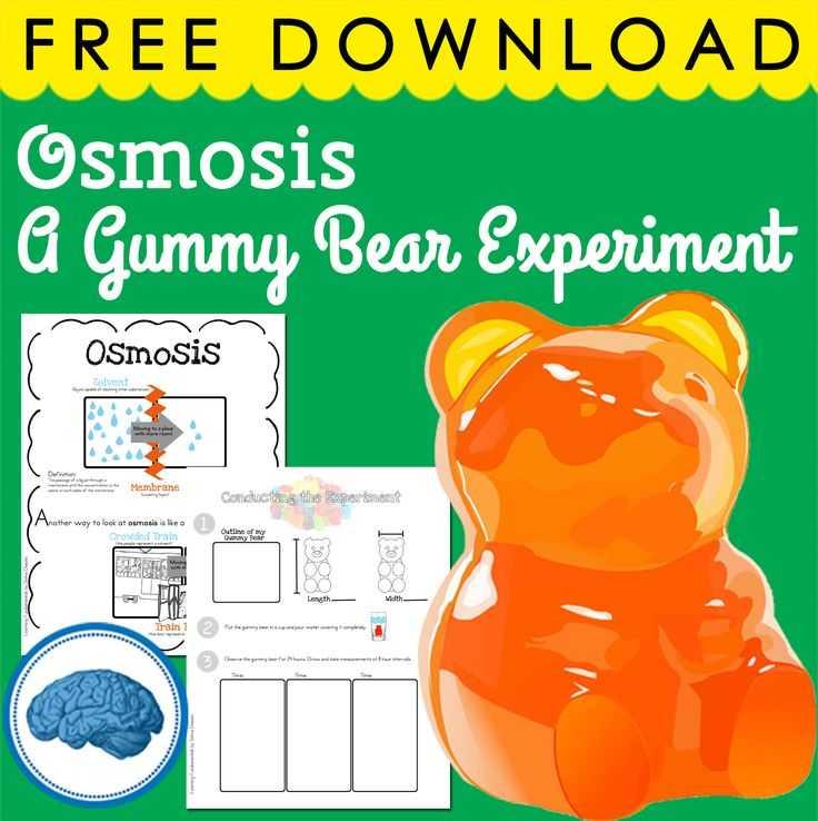Gummy Bear Science Experiment Worksheet Also 151 Best Bears Images On Pinterest