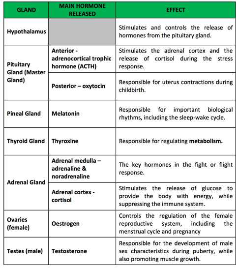 Human Endocrine Hormones Worksheet Key Along with College Essay Help for Busy Students