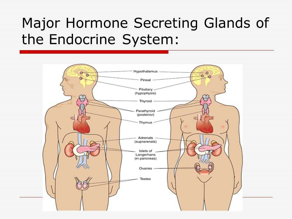 Human Endocrine Hormones Worksheet together with Fantastisch Endokrine System Hormone Ideen Menschliche Anatomie
