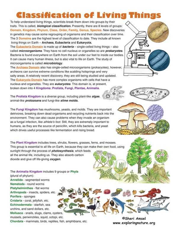 Kingdom Classification Worksheet Answers or Classification Of Living Things Find This On Exploringnature