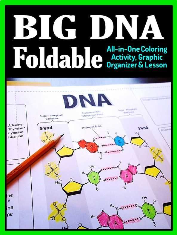 Lesson 7.2 Cell Structure Worksheet Answers and Dna Structure Foldable Big Foldable for Interactive Notebooks or