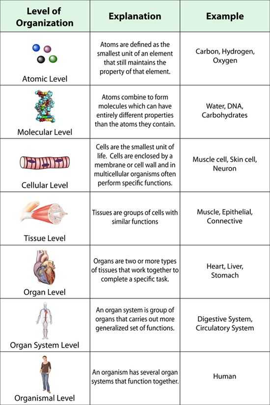 Levels Of organization Worksheet Answers and Biology Worksheets College